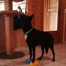 """SKN-Fortbildungsseminar """"Physiotherapeutische Übungen zur Stärkung der Tiefenmuskulatur beim Hund"""""""