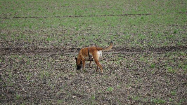Landesverbandsmeisterin der Fährtenhunde Ravensberg-Lippe 2019 ist Isolde Rose mit Athos